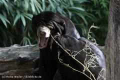 Zoo_Muenster_010813_IMG_3417