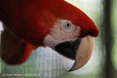 Zoo_Muenster_010813_IMG_3468
