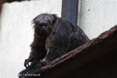 Zoo_Muenster_010813_IMG_3522