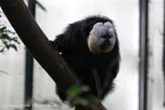 Zoo_Muenster_010813_IMG_3535