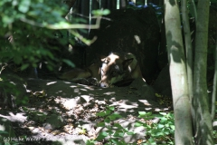 Zoo_Muenster_010813_IMG_3577