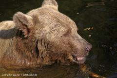 Zoo-Muenster-260909IMG_5745
