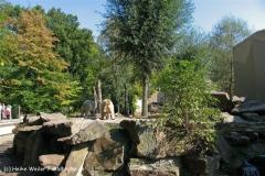 Zoo-Muenster-260909IMG_5756_9787