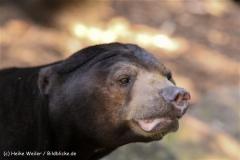 Zoo-Muenster-260909IMG_5767