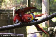 Zoo-Muenster-260909IMG_5805