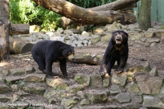 Zoo-Muenster-260909IMG_5898