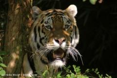 Zoo-Muenster-260909IMG_5965