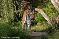 Zoo-Muenster-260909IMG_5985