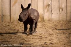 Zoo-Muenster-260909IMG_6010