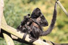Zoo Osnabrueck 101010- IMG_2155