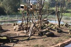 Zoo Osnabrueck 101010- IMG_2213