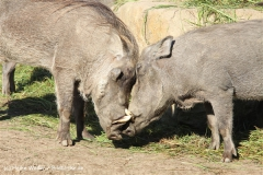 Zoo Osnabrueck 101010- IMG_2253