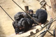 Zoo Osnabrueck 101010- IMG_2347-2