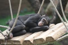 Zoo Osnabrueck 101010- IMG_2354-2