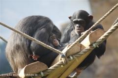 Zoo Osnabrueck 101010- IMG_2386-2