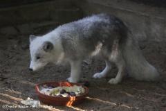 Zoo Osnabrueck 101010- IMG_2419