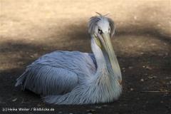 Zoo Osnabrueck 101010- IMG_2529