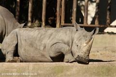 Zoo Osnabrueck 101010- IMG_2564