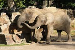Zoo Osnabrueck 101010- IMG_2572-3