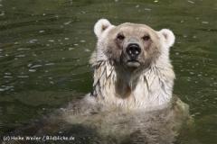 Zoo_Osnabrueck_230712_IMG_7962