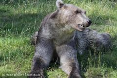 Zoo_Osnabrueck_230712_IMG_7972