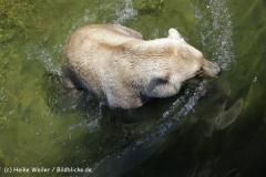 Zoo_Osnabrueck_230712_IMG_7976