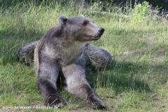 Zoo_Osnabrueck_230712_IMG_7980
