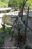 Zoo_Osnabrueck_230712_IMG_8006_6197