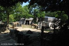 Zoo_Osnabrueck_230712_IMG_8018_6205