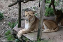Zoo_Osnabrueck_241015_IMG_0160