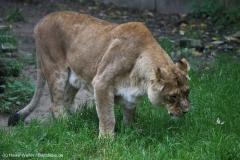 Zoo_Osnabrueck_241015_IMG_0190