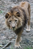 Zoo_Osnabrueck_241015_IMG_0214