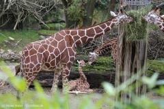 Zoo_Osnabrueck_241015_IMG_0237