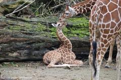 Zoo_Osnabrueck_241015_IMG_0241