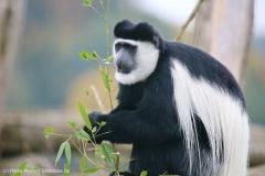 Zoo_Osnabrueck_241015_IMG_0319