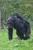 Zoo_Osnabrueck_241015_IMG_0357