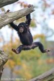 Zoo_Osnabrueck_241015_IMG_0370