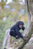 Zoo_Osnabrueck_241015_IMG_0372