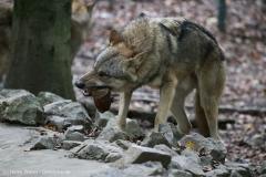 Zoo_Osnabrueck_241015_IMG_0390