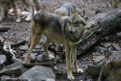 Zoo_Osnabrueck_241015_IMG_0394