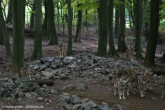 Zoo_Osnabrueck_241015_IMG_0410