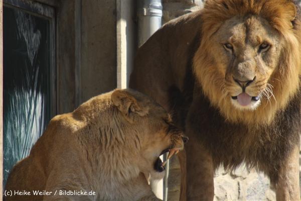 Zoo-Osnabrueck-250410-IMG_0620