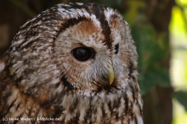Zoo-Osnabrueck-250410-IMG_0704