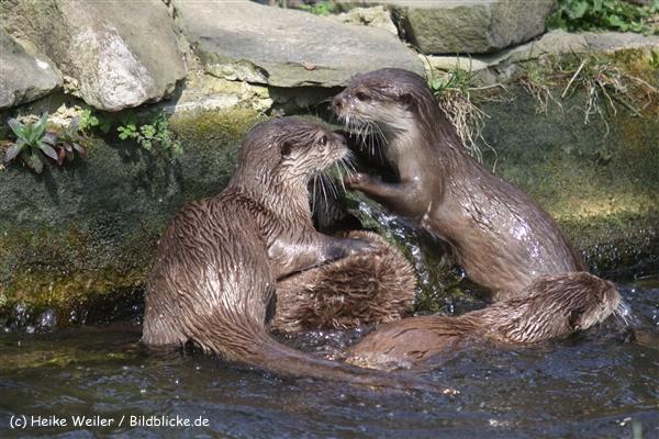 Zoo-Osnabrueck-250410-IMG_0795