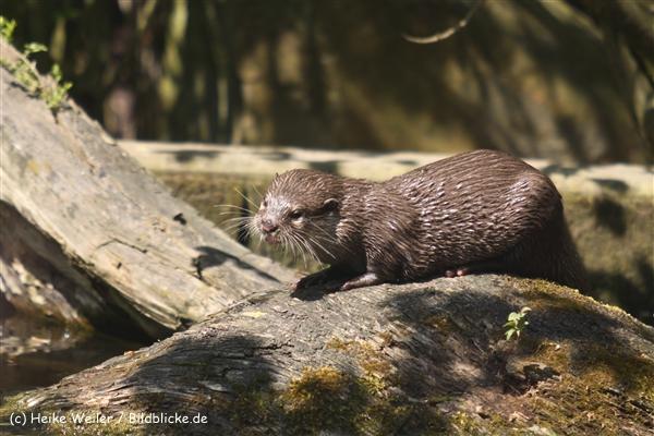 Zoo-Osnabrueck-250410-IMG_0811