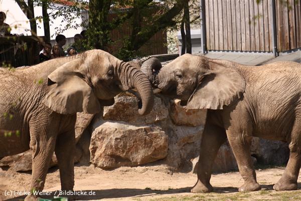 Zoo-Osnabrueck-250410-IMG_0898