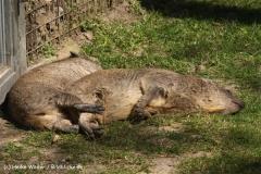 Zoo-Osnabrueck-250410-IMG_0596
