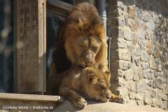 Zoo-Osnabrueck-250410-IMG_0615