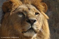 Zoo-Osnabrueck-250410-IMG_0623