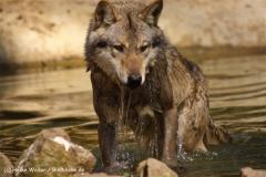 Zoo-Osnabrueck-250410-IMG_0649